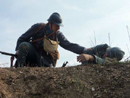 Checking on a downed comrade, April 2012.
