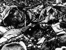A decomposed French soldier, Verdun